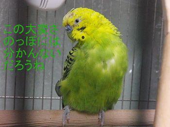 f0196665_23295097.jpg