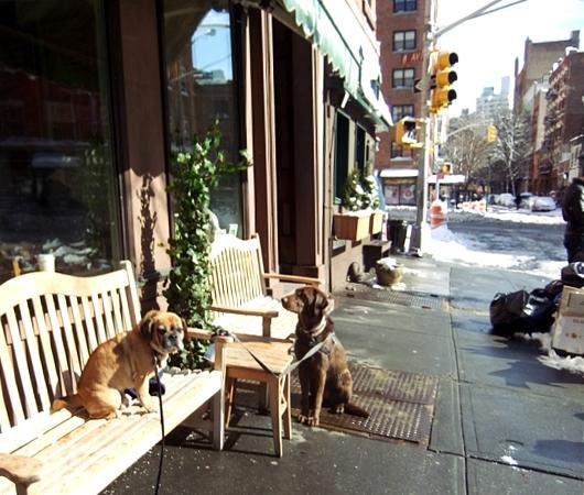 大雪後のマンハッタンの様子_b0007805_821478.jpg