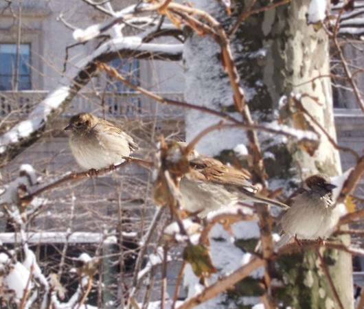 大雪後のマンハッタンの様子_b0007805_8221950.jpg