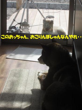 f0143123_114347.jpg