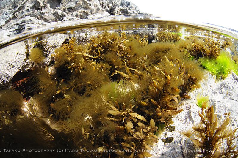 モヅク!?海藻楽園!_b0186442_0412437.jpg