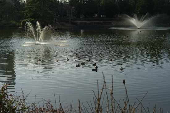 鴨の池_e0129750_2031434.jpg