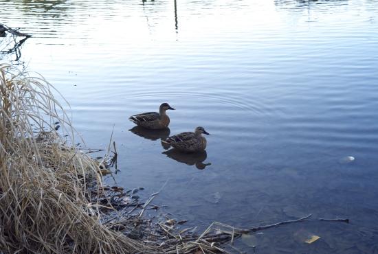 鴨の池_e0129750_203486.jpg