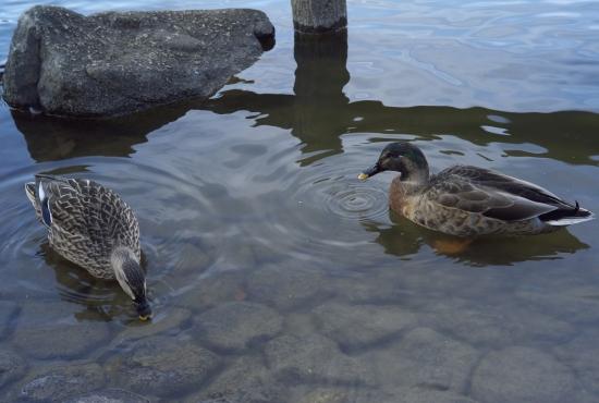 鴨の池_e0129750_204761.jpg