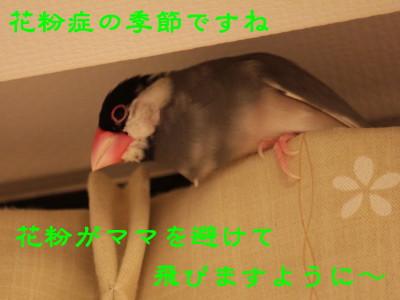 b0158061_2263848.jpg