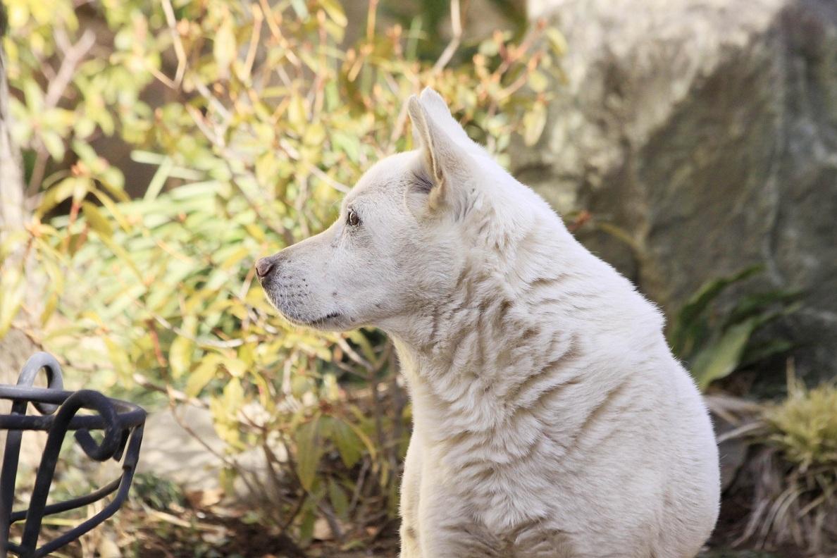 哲学犬シロ_a0107574_1991965.jpg