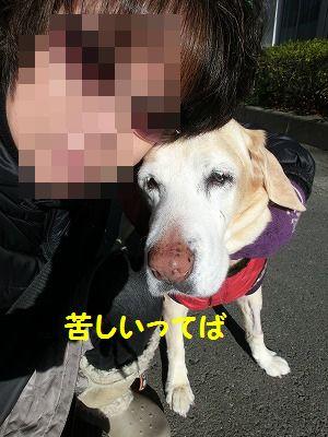 ぽかぽか陽気・・梯子は真っ直ぐに延びて_e0222588_17495579.jpg