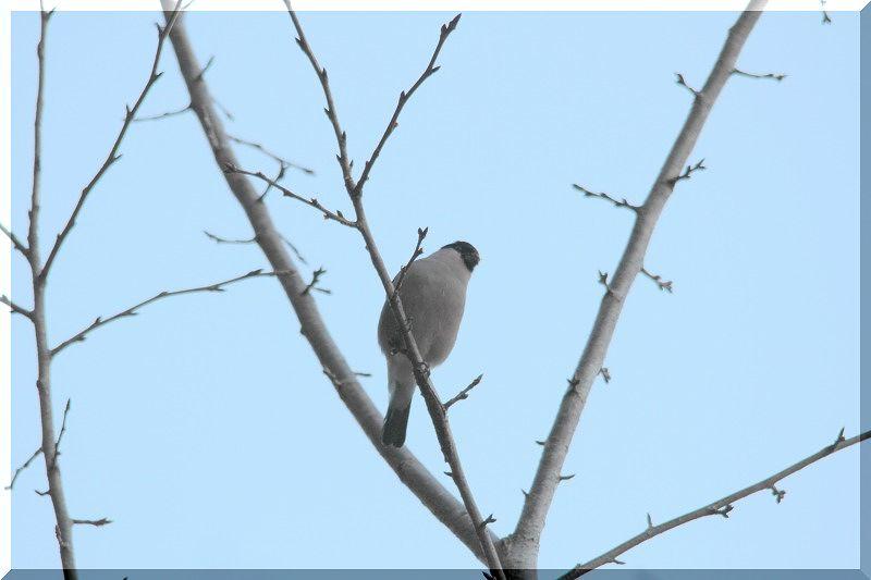 里山公園の鳥さん_f0100825_20462115.jpg