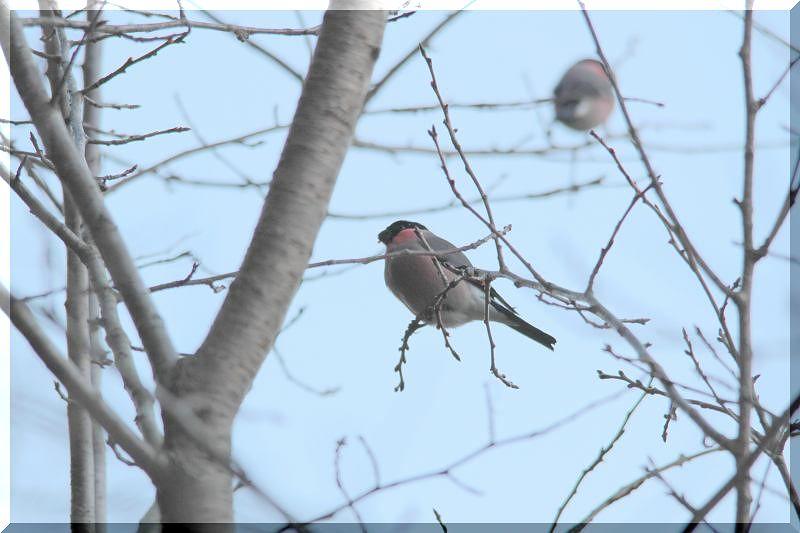 里山公園の鳥さん_f0100825_20463714.jpg