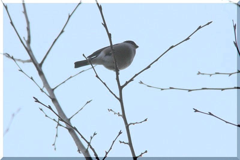 里山公園の鳥さん_f0100825_20472211.jpg