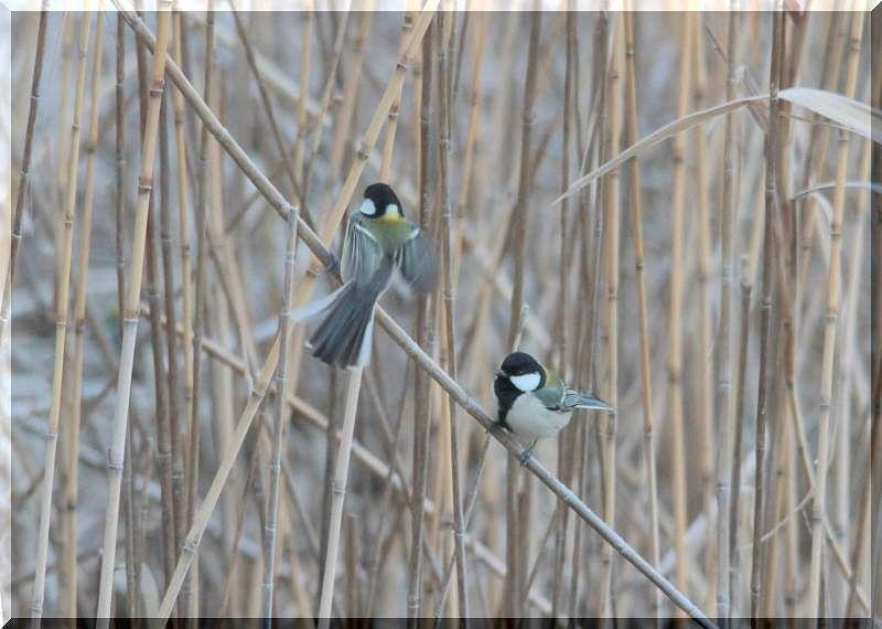 里山公園の鳥さん_f0100825_20485624.jpg