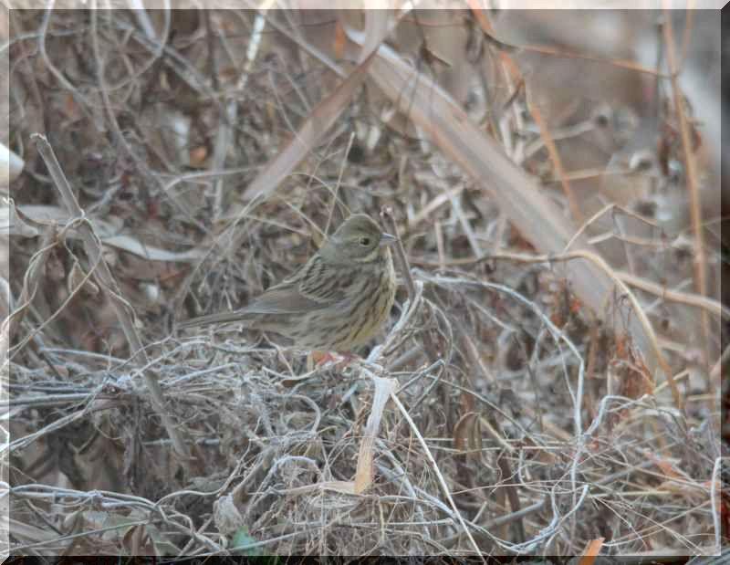 里山公園の鳥さん_f0100825_20495618.jpg