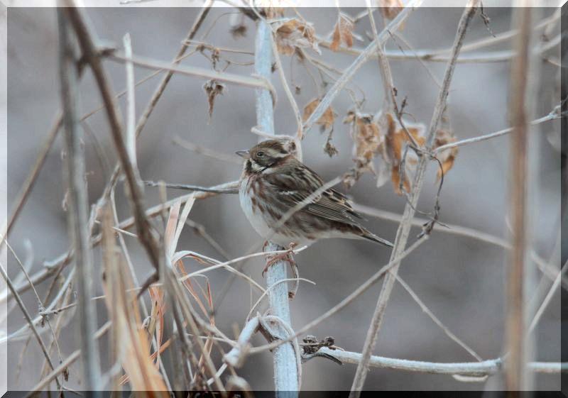 里山公園の鳥さん_f0100825_20505233.jpg