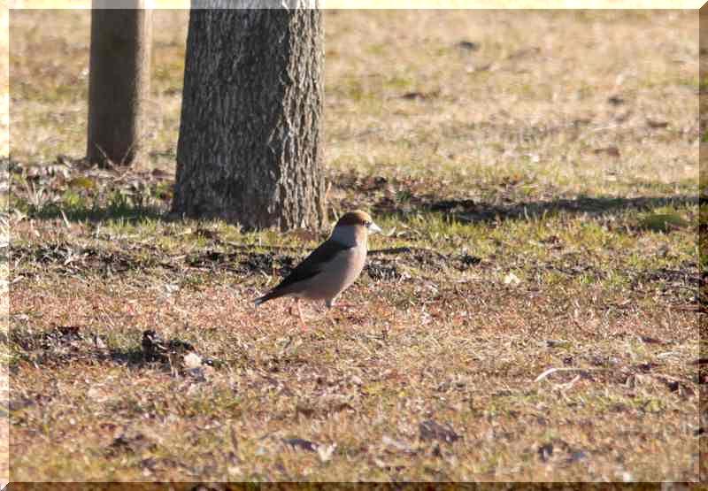 里山公園の鳥さん_f0100825_2052063.jpg