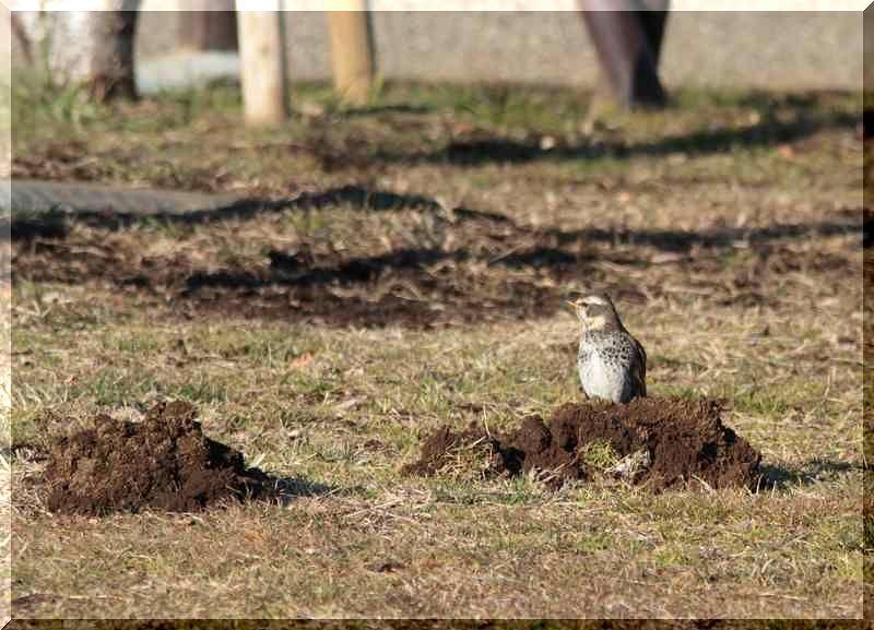 里山公園の鳥さん_f0100825_2145912.jpg