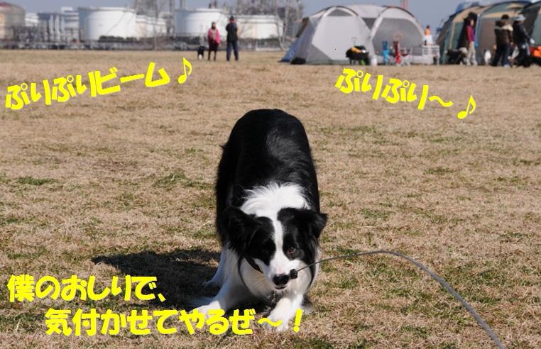 c0147241_10591351.jpg