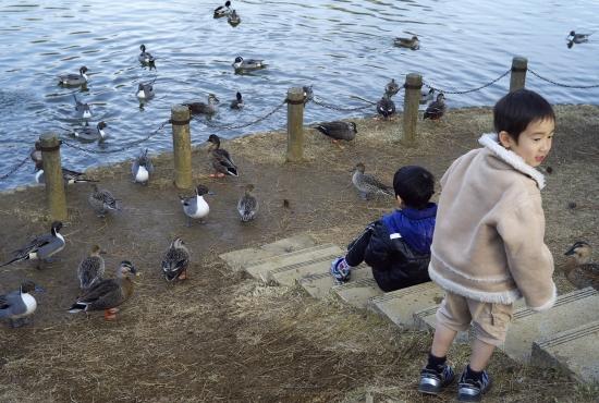 鴨の池(2)_e0129750_1381727.jpg