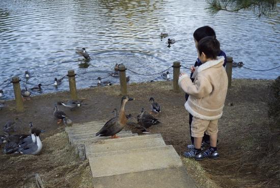 鴨の池(2)_e0129750_1383631.jpg