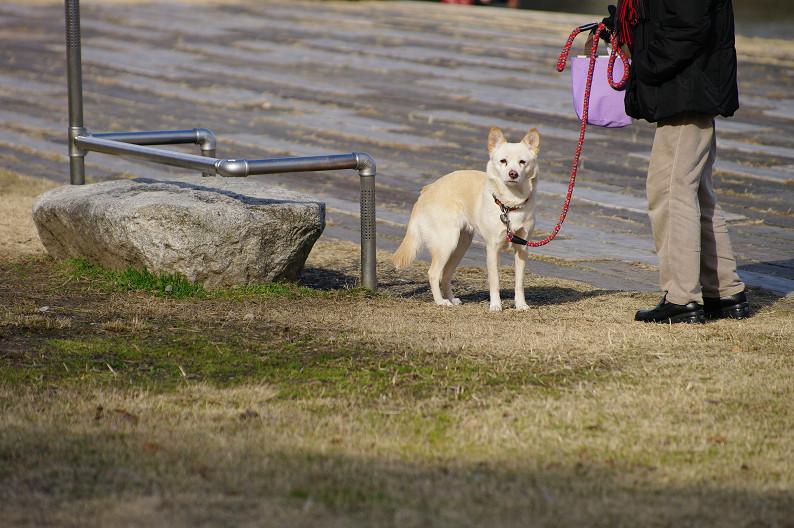 賀茂川散歩スナップ..._f0152550_0132177.jpg