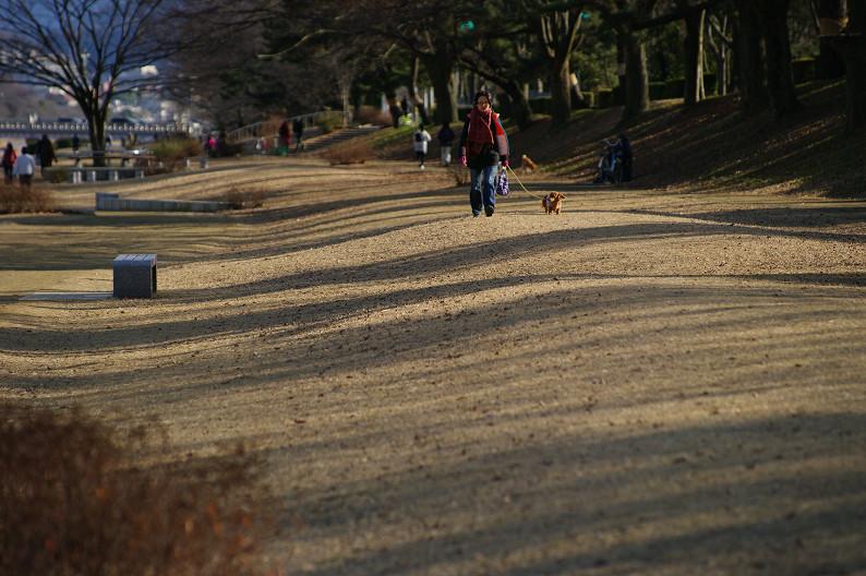 賀茂川散歩スナップ..._f0152550_0162661.jpg