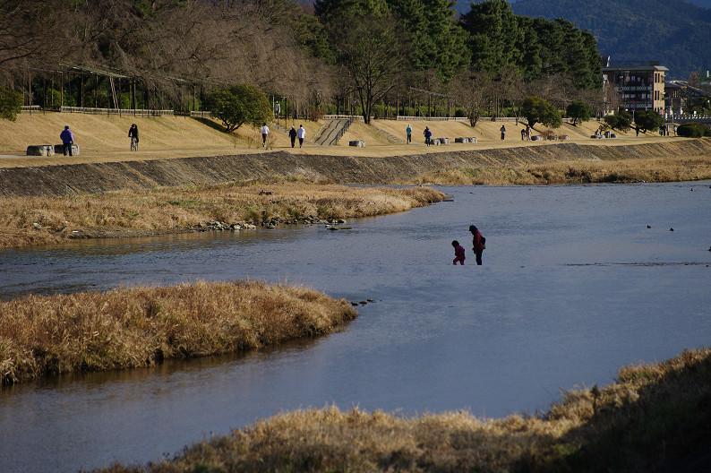 賀茂川散歩スナップ..._f0152550_0163369.jpg