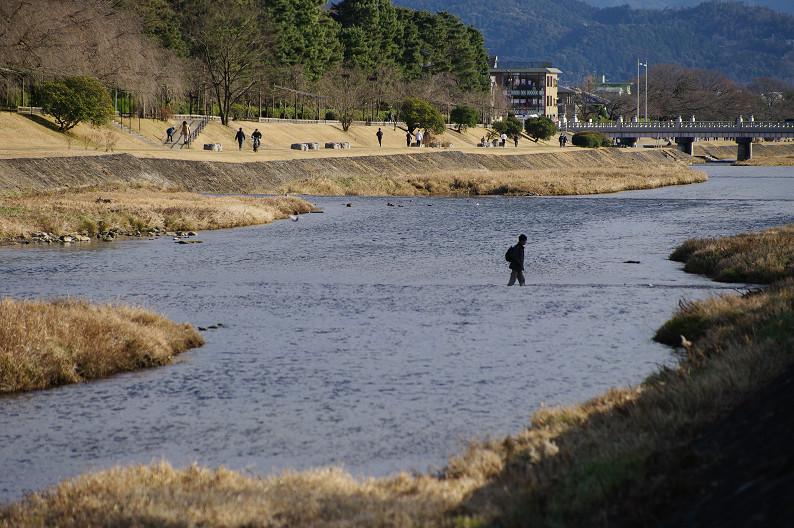 賀茂川散歩スナップ..._f0152550_0163955.jpg