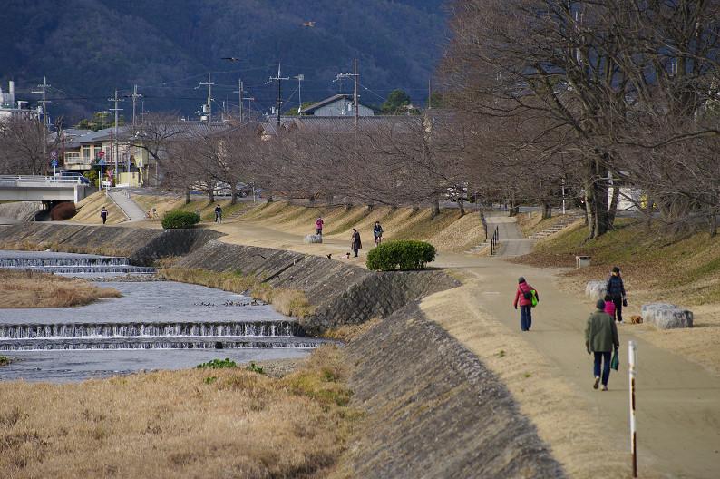 賀茂川散歩スナップ..._f0152550_0171498.jpg