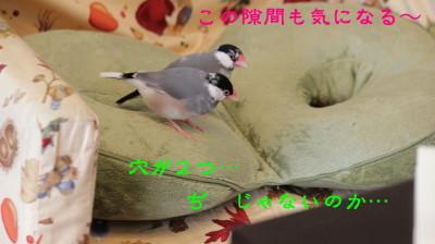 b0158061_2045527.jpg