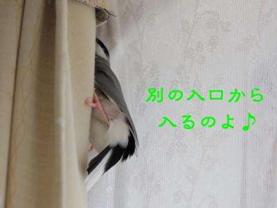 b0158061_20461798.jpg