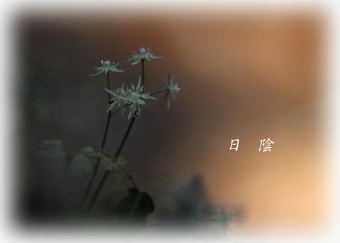 b0012595_22362094.jpg