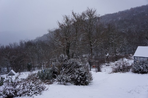 雪ウサギ_f0106597_17165972.jpg