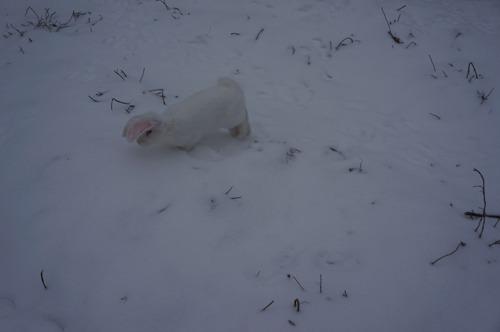 雪ウサギ_f0106597_17195712.jpg
