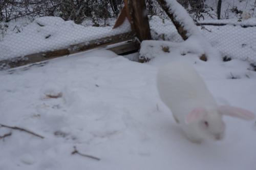 雪ウサギ_f0106597_1719925.jpg