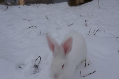 雪ウサギ_f0106597_17204225.jpg