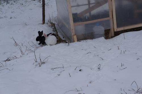 雪ウサギ_f0106597_17295479.jpg