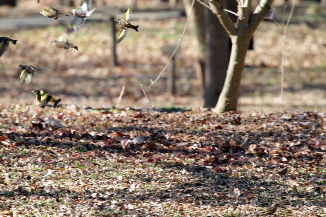 MFを鳥撮り散歩_f0239515_21234670.jpg