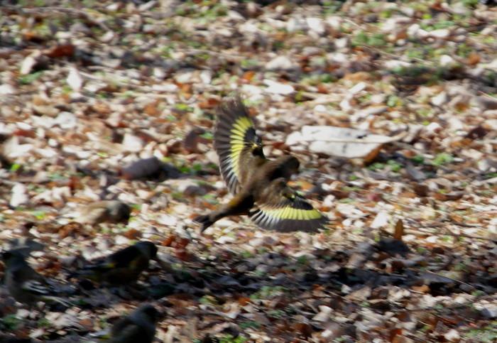 MFを鳥撮り散歩_f0239515_21253948.jpg