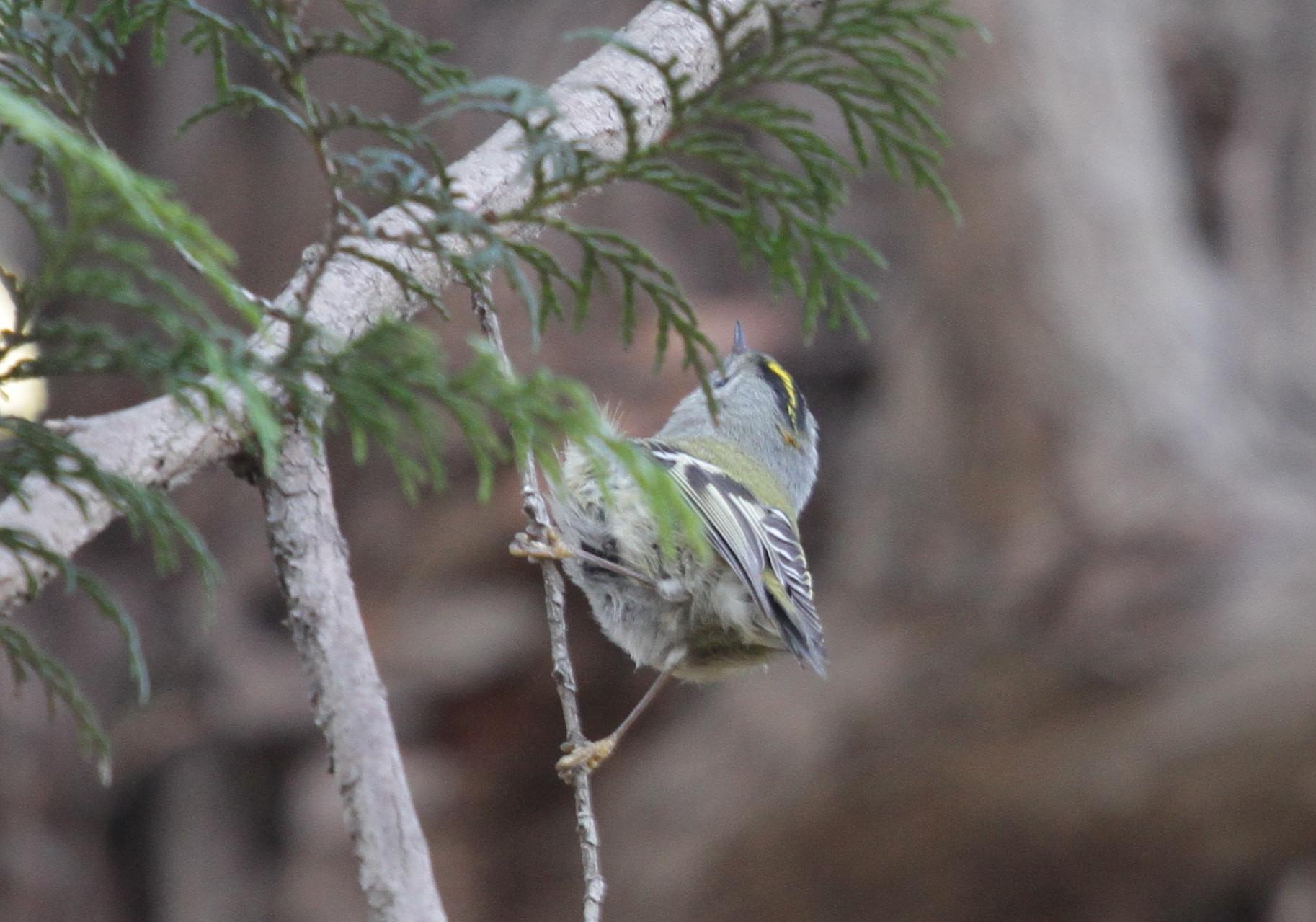 MFを鳥撮り散歩_f0239515_21264142.jpg
