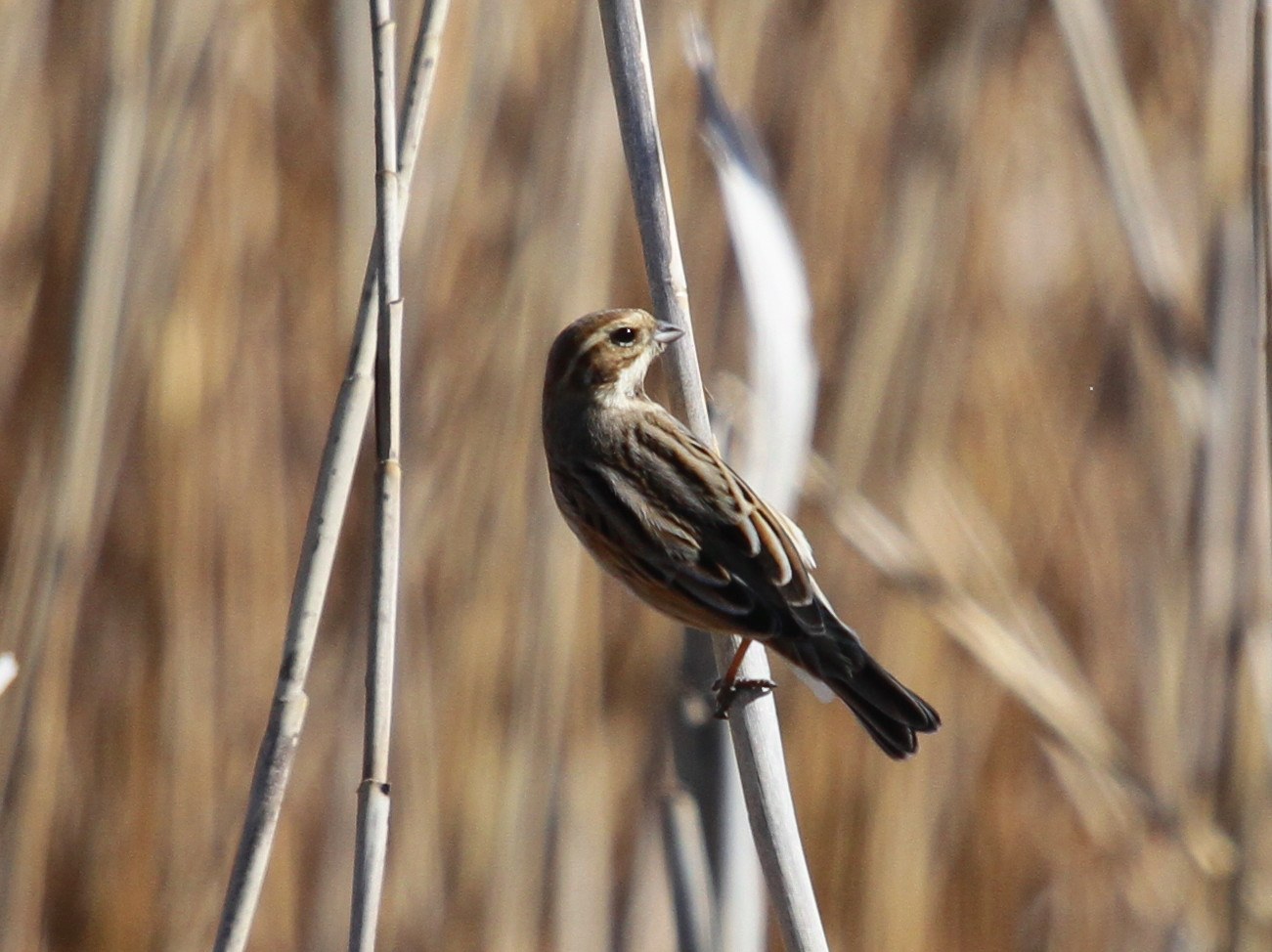 MFを鳥撮り散歩_f0239515_21275856.jpg