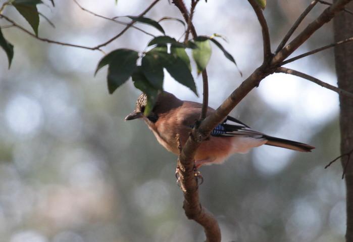 MFを鳥撮り散歩_f0239515_21301369.jpg