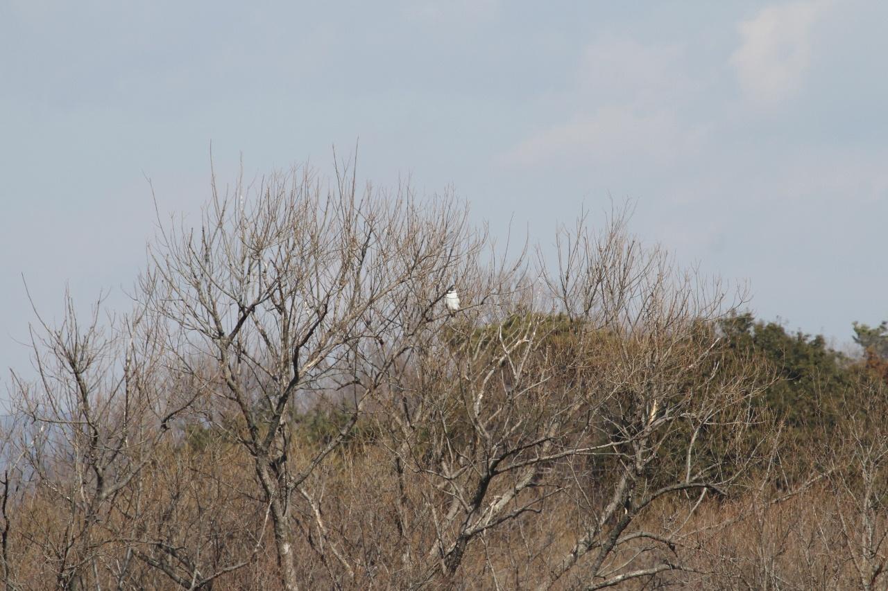 MFを鳥撮り散歩_f0239515_21355252.jpg