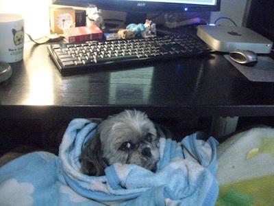 フィネガンズ・ウェイクを食べた犬_c0109850_13593884.jpg