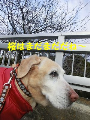 ボブ君との再会_e0222588_1642229.jpg