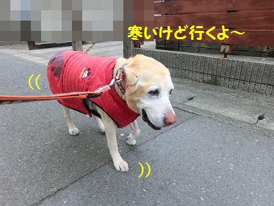 ボブ君との再会_e0222588_16502450.jpg