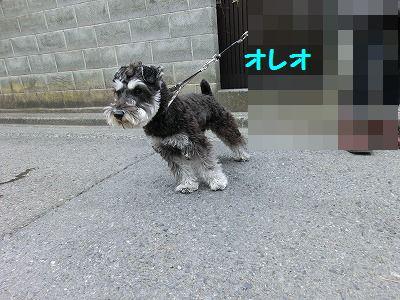 ボブ君との再会_e0222588_16503995.jpg