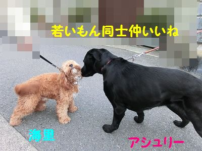ボブ君との再会_e0222588_16504649.jpg