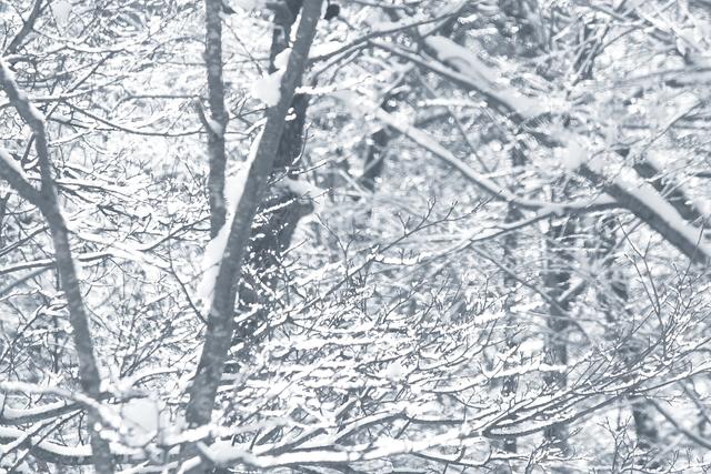 冬の写真、幻想的(かな?)_a0158797_23595153.jpg