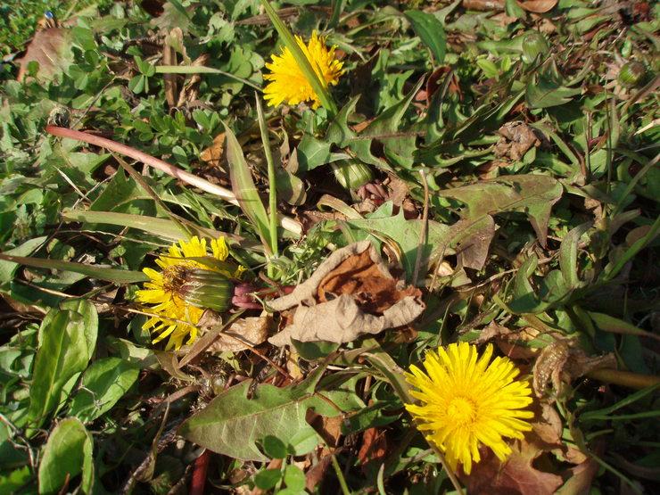 春を感じて_f0249710_18325682.jpg