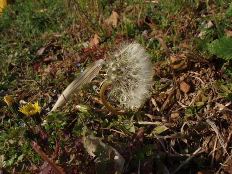 春を感じて_f0249710_18341484.jpg