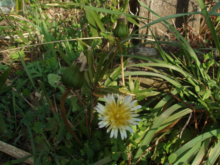 春を感じて_f0249710_18363234.jpg